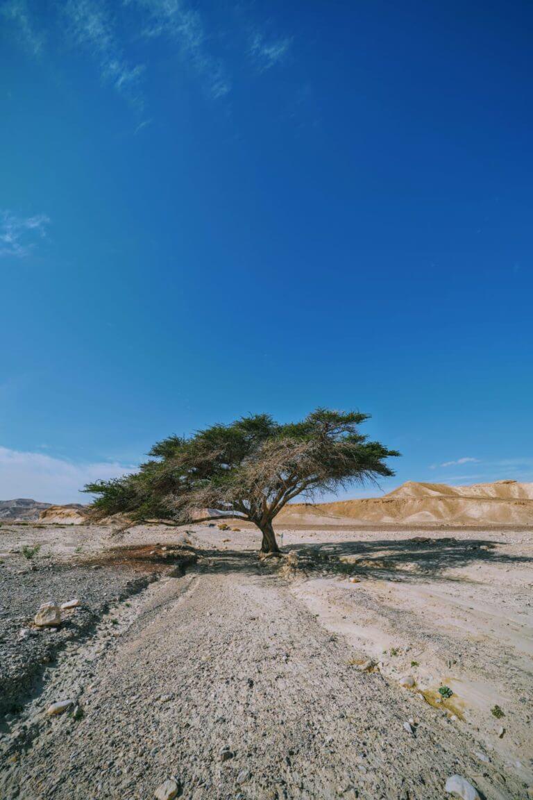 צימר במדבר לזוגות